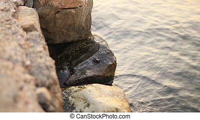 A small crab on the rock. Texture of water