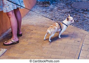 A small dog. Dog on a leash.