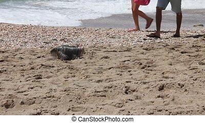 A small dog on a sandy beach