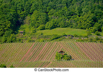 A small farm house surrounded by vineyards.