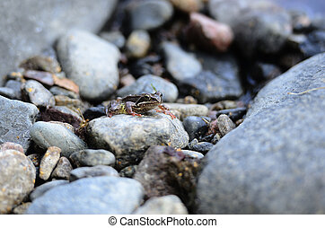 a small frog among the stones