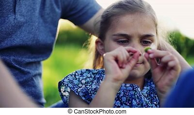 A small girl with her father picking petals off a flower in...