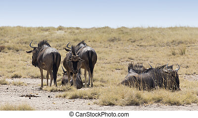 A small group of buffalo