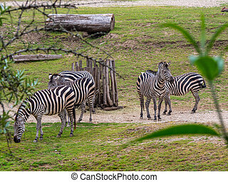 A small group of zebras