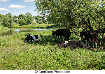 A small herd of cows in the meadow