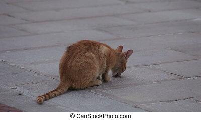 A small homeless kitten