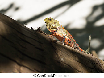 A small lizard sitting on a tree