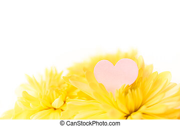 a small pink heart with a place for text decorated with yellow chrysanthemums on a white background