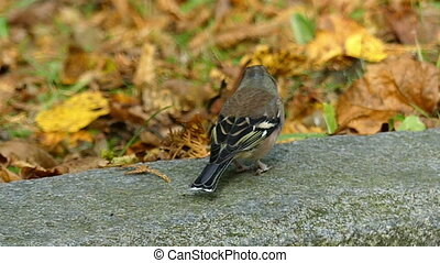 A small sparrow sits on a big stone in a park in autumn in slo-mo