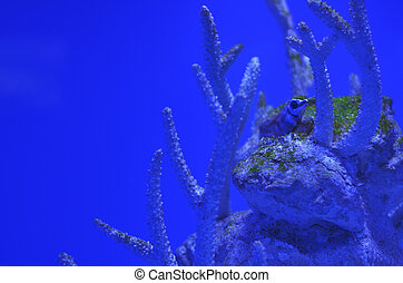 A small spiny fish among the corals