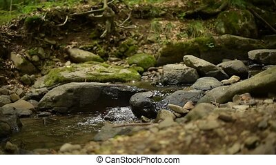 A small stream in a summer forest. - Small stream in a...