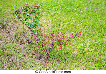 A small tree grows in the backyard