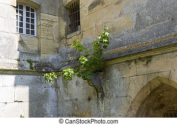 A small tree on the wall of an old castle.