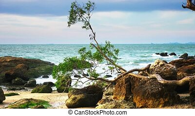 a small tree with a twisted trunk on the rocky coast of the sea. windy weather