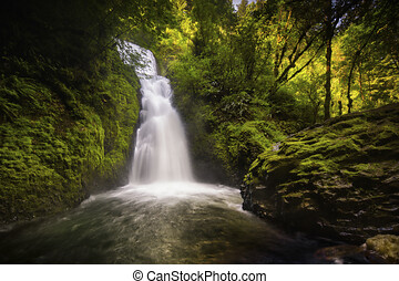 A small waterfall and green trees, Amazing small hidden waterfall on a hike through a forest.