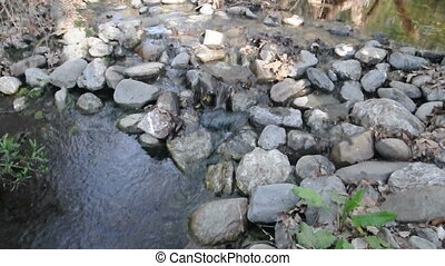 A small waterfall breaks the quiet of a slow moving stream
