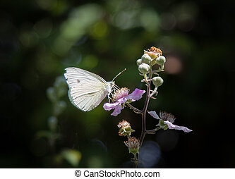 A small white butterfly on flower