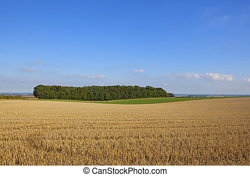 a small woodland beside a harvested wheat field