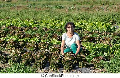 smiling brunette woman picking lettuce salads