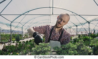 A smiling man works in a greenhouse using a garden tool. The gardener sprinkles decorative trees.