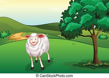 A smiling sheep