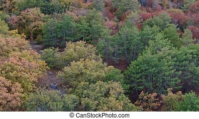 A smooth flight over the treetops. bright paint leafy trees green orange red yellow. Aerial shot