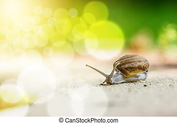 snail - a snail in the floor