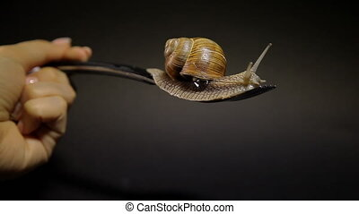 A snail is crawling on a fork on a black background. A hand...