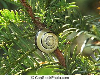 A snail on a twig