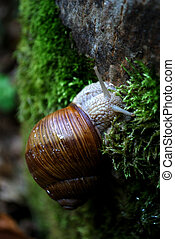 a snail on the moss