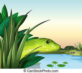 A snake at the pond