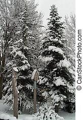 A Snow Covered Birdhouse After a Snowfall