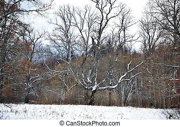 A snowy forked tree in the field aside.