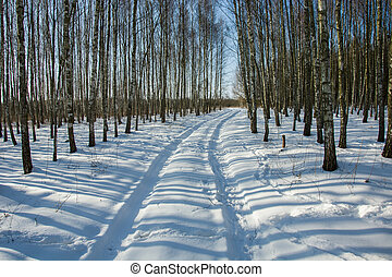 A snowy road in the forest, winter sunny day