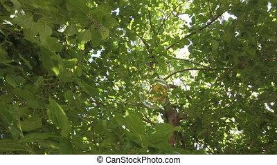 A soap bubble flies among the leaves