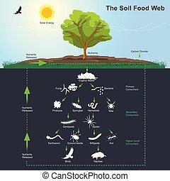 a, solo, alimento, teia, diagram., ilustração, info, graphic.