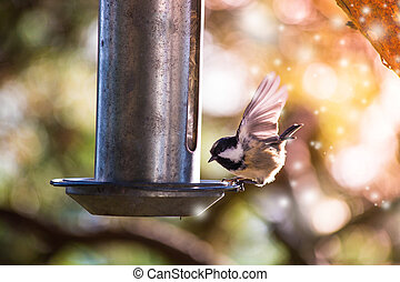 a Sparrow flies in the sky and colorful fantasy bokeh background with a food bowl