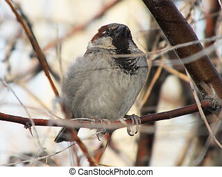 A sparrow on a branch