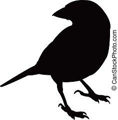 a sparrow silhouette