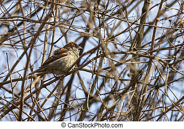 A sparrow sits on a twig in the middle of a bush.