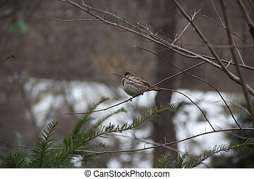 a sparrow sitting on a tree branch in winter