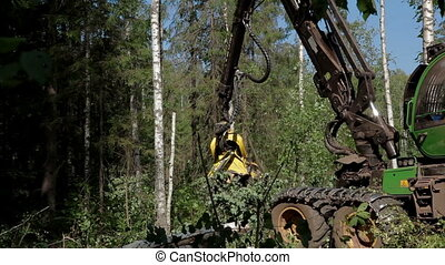 A specialized Feller Buncher saws tree trunk. - Harvester...
