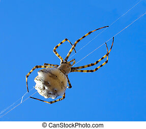 A spider climbing on a strand of his web