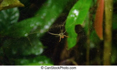 A spider macro shot on it's web - A macro shot of spider on...