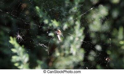 A spider on a web in the forest.