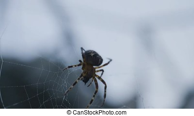 A spider spinning its web in the forest. Spider spinning a web
