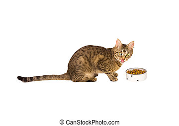 A spotted and striped cat licks its lips near a plate of dry food. White background, isolate. Pet food, balanced nutrition, veterinary medicine, a well-fed, satisfied pet. Copy space