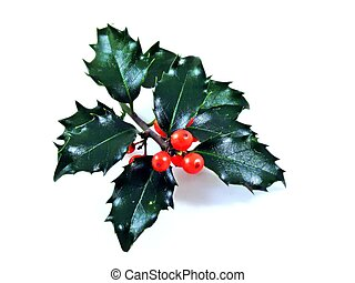 A sprig of christmas holly - A sprig of holly on a white...