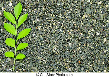 a sprig of green leaves on a stone background
