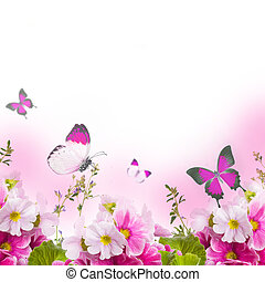 A spring primrose is in a bouquet, floral background and ...